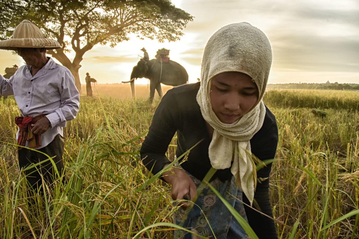 Kinderarbeit bekämpfen UNO Nachhaltigkeitsziel